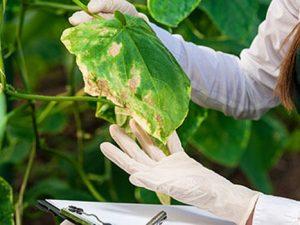 Curso online de Enemigos y Enfermedades de las Plantas