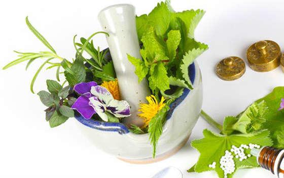 Curso online de Plantas Medicinales